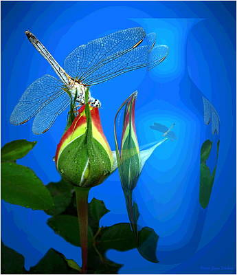 Dragonfly And Bud On Blue Poster by Joyce Dickens