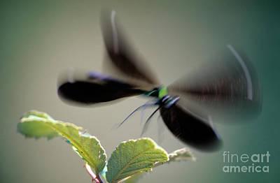 Dragonfly In Flight Poster by George Atsametakis
