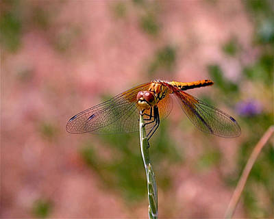 Dragonfly Poster by Rona Black