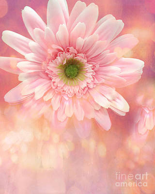 Dreamy Cottage Shabby Chic Pink Yellow Mango Gerber Daisy Flowers  Poster by Kathy Fornal