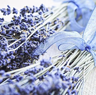 Dried Lavender Poster by Elena Elisseeva