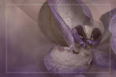 Dried Orchid Poster by Cindy Rubin