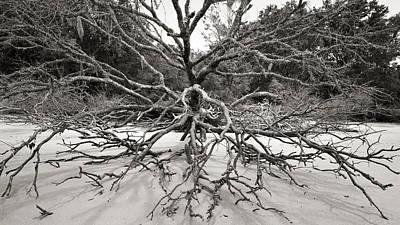 Driftwood Poster by Barbara Kraus - Northrup
