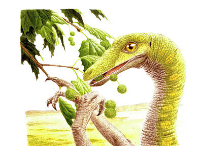 Dromiceiomimus Dinosaur Poster by Deagostini/uig