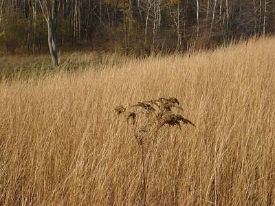 Dry Grass Poster by David Fiske