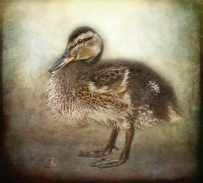 Duckling Poster by Pauline Fowler
