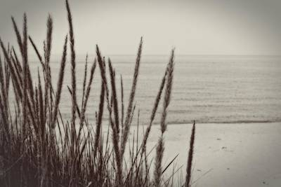 Dune Grass In Early Spring Poster by Michelle Calkins