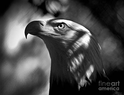Eagle In Shadows Poster by Robert Frederick