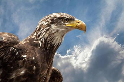 Eagle Portrait Poster by Sheila Haddad