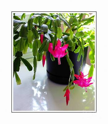 Easter Cactus In The Sun 2 Poster by Barbara Griffin