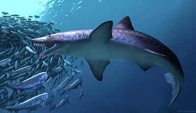 Edestus Giganteus Shark Poster by Jaime Chirinos