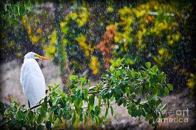Egret In Paradise  Poster by Gary Keesler