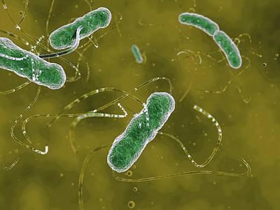 Ehec Bacteria Poster by Juan Gaertner