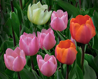 Eight Tulips And One Bee Poster by Muriel Levison Goodwin