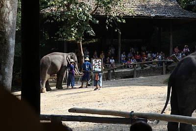 Elephant Show - Maesa Elephant Camp - Chiang Mai Thailand - 011346 Poster by DC Photographer
