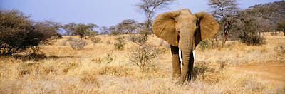 Elephant, Somburu, Kenya, Africa Poster by Panoramic Images