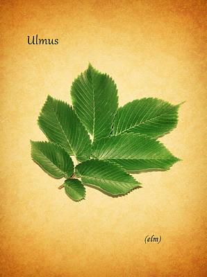 Elm Poster by Mark Rogan