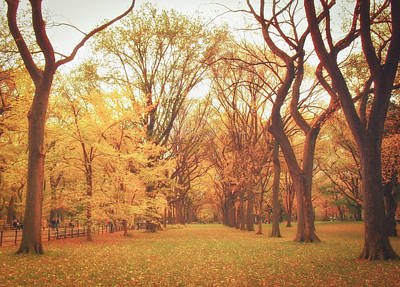 Elm Trees - Autumn - Central Park Poster by Vivienne Gucwa