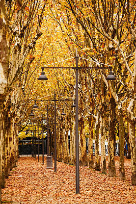 Esplanade Des Quinconces Park Poster by Panoramic Images