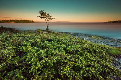 Evening Falls On A Juniperberry Bush Poster by Jakub Sisak