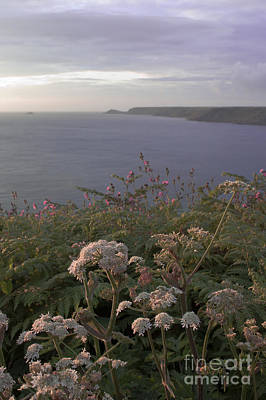 Evening Light In Cornwall Poster by Terri Waters
