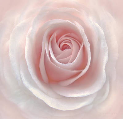 Everlasting Pink Rose Flower Poster by Jennie Marie Schell