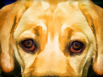 Face Of Yellow Lab Poster by David Letts