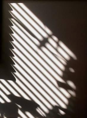 Face Shadow Poster by Joy Bradley
