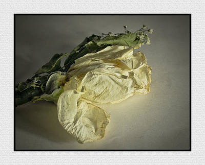 Fading Rose Poster by Ron Roberts