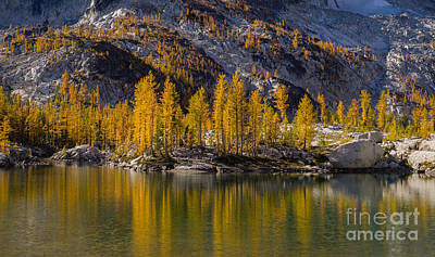 Fall Colors Larches Reflection Poster by Mike Reid