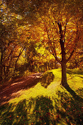 Fall Colors Poster by Phil Koch