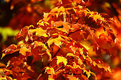 Fall Foliage Colors 14 Poster by Metro DC Photography