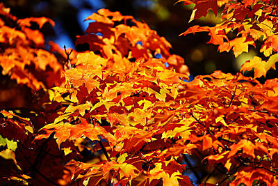 Fall Foliage Colors 16 Poster by Metro DC Photography