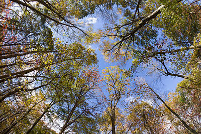 Fall Foliage - Look Up 2 Poster by Kirkodd Photography Of New England