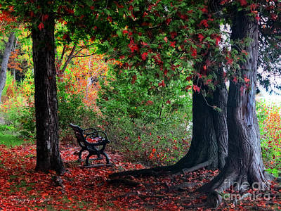 Fall In Henes Park Poster by Ms Judi