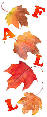 Fall Leaves Poster by Amanda And Christopher Elwell