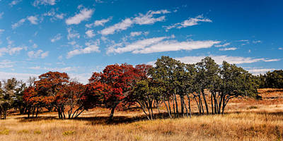 Fall Scene In The Texas Hill Country - Reimers Ranch Hamilton Pool Road - Texas Poster by Silvio Ligutti