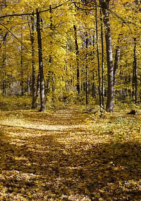 Fall Trail - Arboretum - Madison - Wisconsin Poster by Steven Ralser