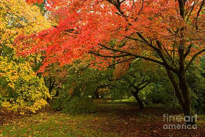 Fall Trees Poster by Amanda Elwell