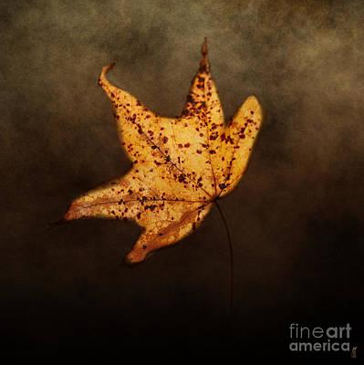 Fallen Golden Leaf Poster by Jai Johnson