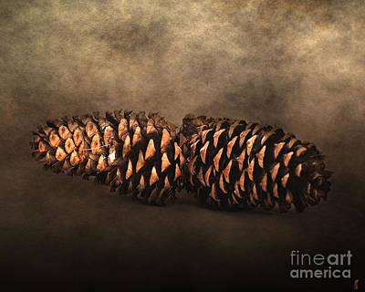 Fallen Pine Cones Poster by Jai Johnson