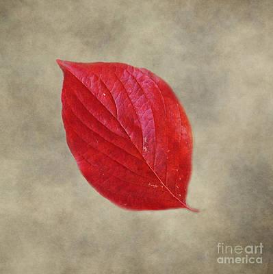 Fallen Red Leaf Poster by Jai Johnson