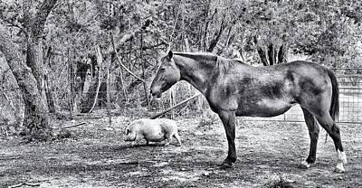 Farm Animals Poster by Sandra Moore