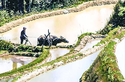 Farmer Plowing Terraced Rice Fields Poster by Lanjee Chee