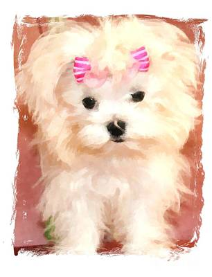 Faux Maltese Bella Poster by Margaret Newcomb