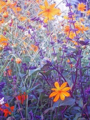 Field Of Flowers  Poster by Ankya Klay