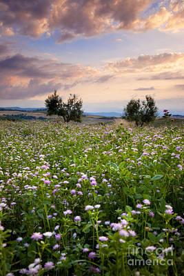 Field Of Wildflowers Poster by Brian Jannsen