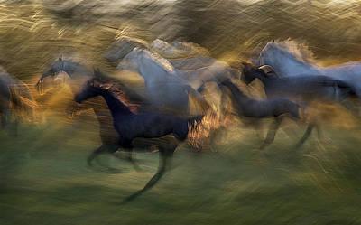 Fiery Gallop Poster by Milan Malovrh