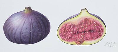 Figs Poster by Margaret Ann Eden
