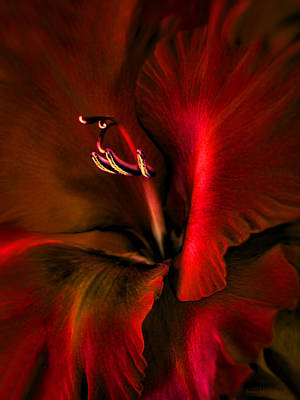 Fire Red Gladiola Flower Poster by Jennie Marie Schell
